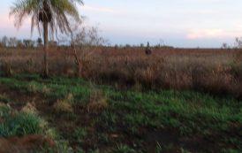 PMA autua e multa fazendeiro por desmatamento em Fátima do Sul (MS)